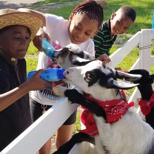 Kids feeding a goat a bottle of milk