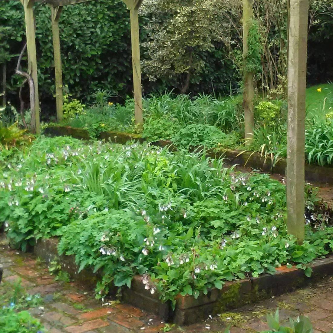 Cottage garden Surrey gardening  Summer planting