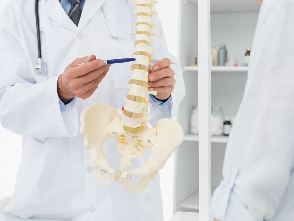 Chiropractor explaining the spine using a 3d diagram
