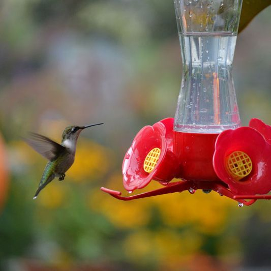 Hummingbirds at the Wildflower Garden and Fairy Retreat