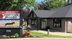 Coeur d'Alene Idaho, Dermatology for Animals in Coeur d'Alene, Dog Dermatologist Coeur d'Alene Idaho, Dermatologist in Coeur d'Alene, Veterinarian Coeur d'Alene, Cat dermatologist Coeur d'Alene, Coeur d'Alene Vets, Coeur d'Alene dermatology vet, Animal Dermatologist, Pet Dermatologist Coeur d'Alene, Veterinary dermatologist near me, animal dermatology idaho, animal dermatologist idaho