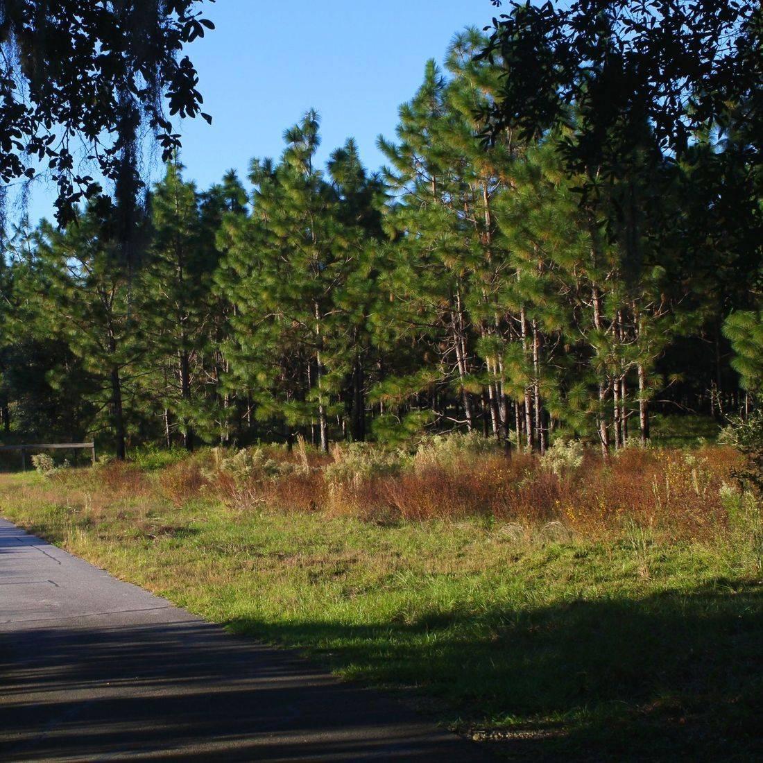 Hawthorne Trail - Gainesville, FL
