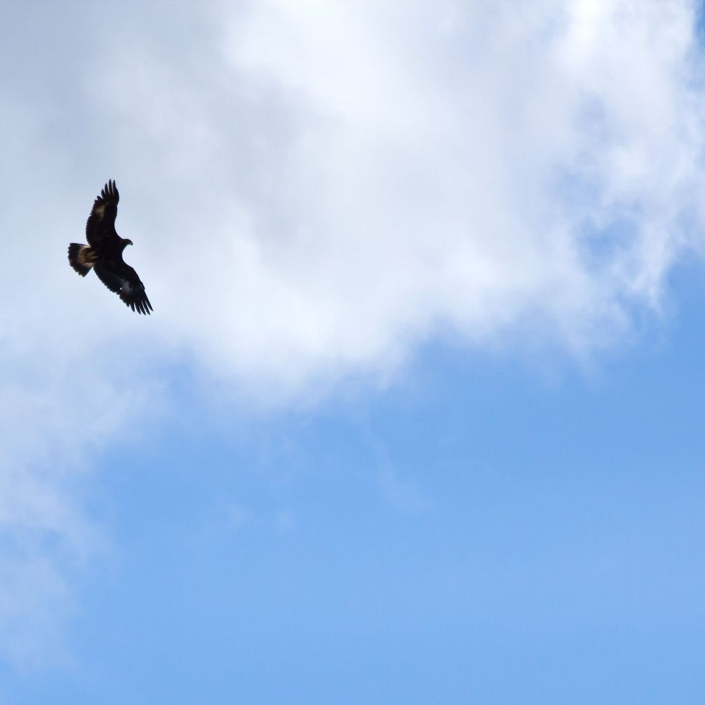 Bird, nature, natural, forest, therapy, guide, tour, eagle, crow