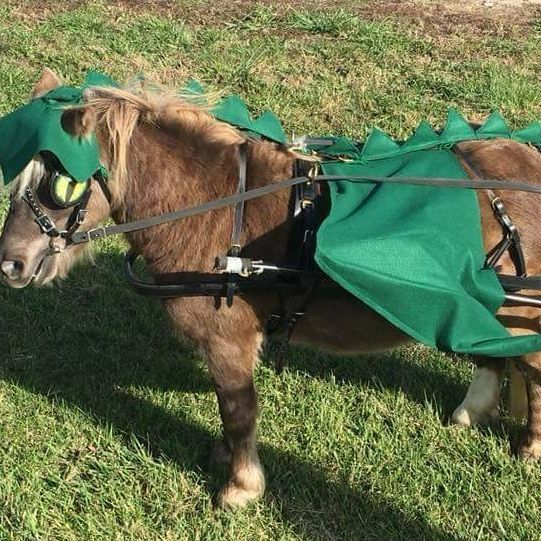 Mini horse dressed as a dinosaur