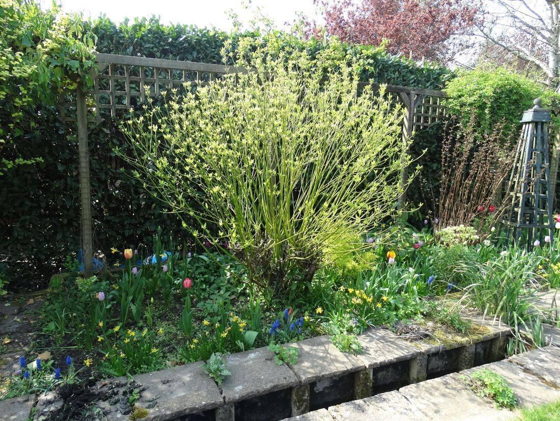 flowerbed Surrey Garden gardening