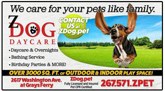 Z Dog provides experienced loving dog daycare , walks, boarding and parties.