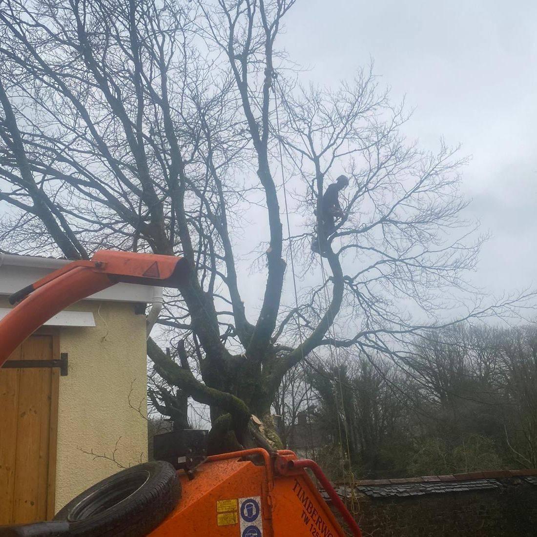 Tree Surgeon Torrington