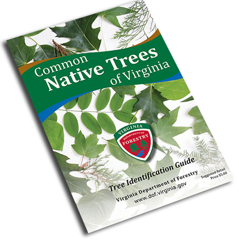 Virginia, Department, Of, Forestry, Book, Common, Native, Shrubs, And, Woody, Vines, Of, Virginia, Free, Virginia, Field, Guide