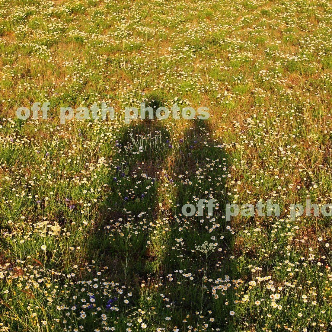 photography, nature, wildflowers, love, romance, field, shadows, man, woman