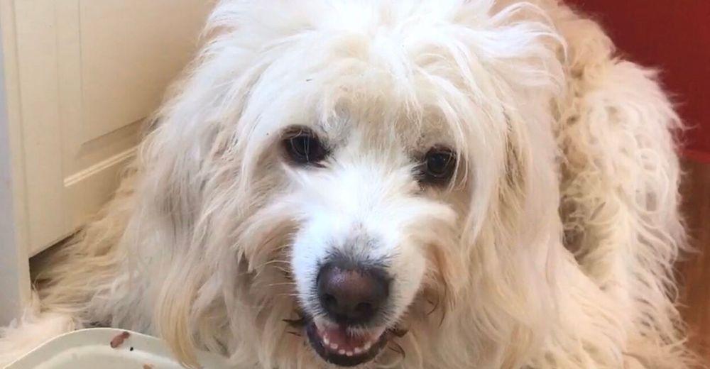 Hundetrainerin Marion Höft