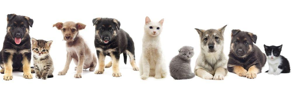 Hunde und Katzen warten auf etwas