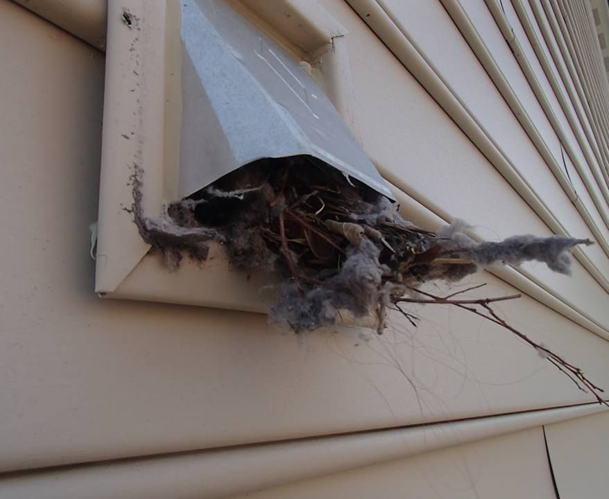 how to remove a bird nest in dryer vent