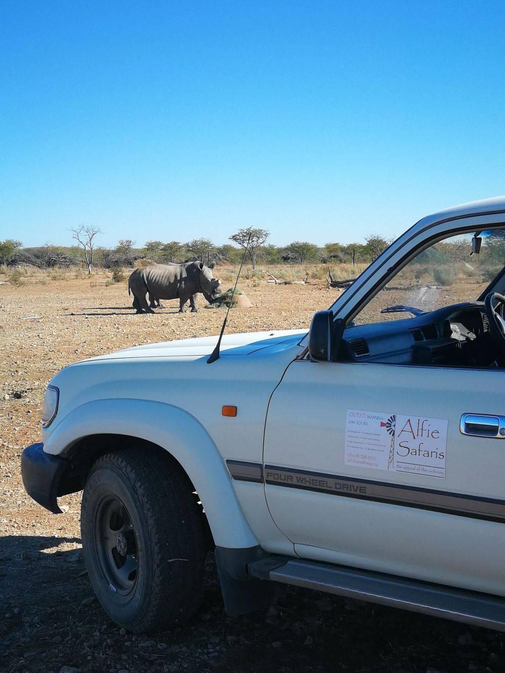 personalised, rhino viewings, rhinoceros namibia, white rhinos, animals outjo, anmial viewings namibia, alfie, alfie safaris, alfielouwnam, activities outjo, to do near outjo, specialised animal, nature tour outjo, day tours outjo, etosha pans, etosha
