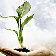 hand, plant, Catherine Parker Therapy, inspiration