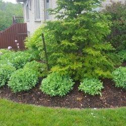 Garden Maintenance and Mulch Application