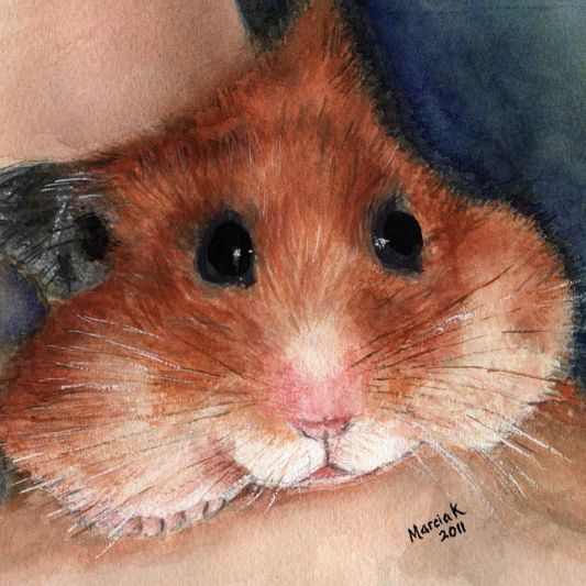 Hamster watercolour painting by Marcia Kuperberg
