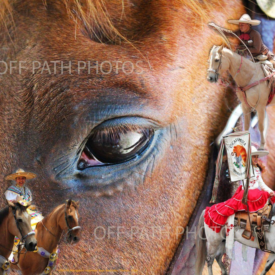 photography, rodeo, horses, animals, rope tricks, equestrian, fiesta, dreams, festival