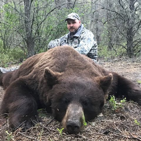 Hunt, Hunting, Big Black Bear, Bear,  Hunt Manitoba Canada