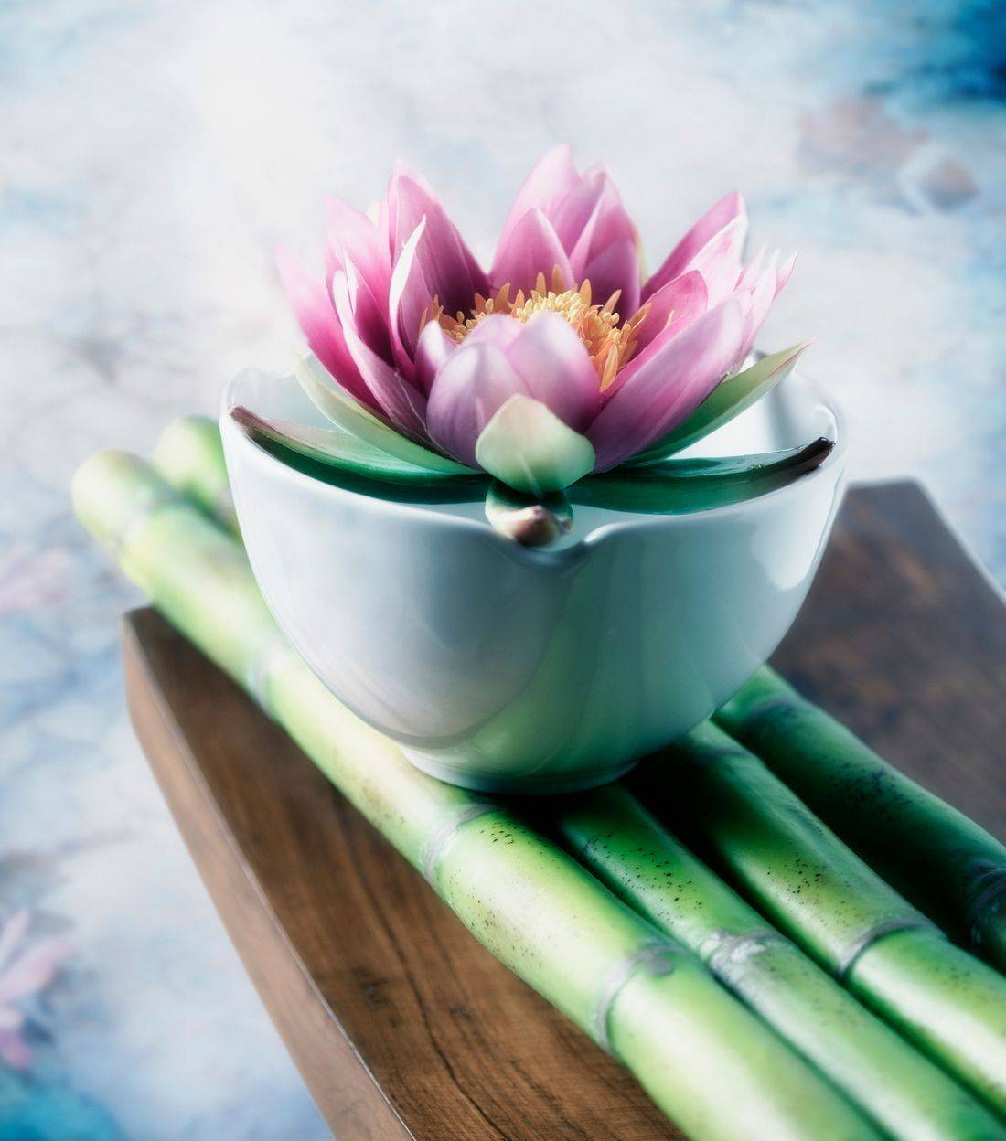 lotus flower with bamboo