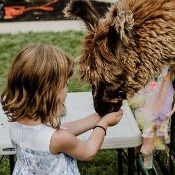 Little girl feeding llama