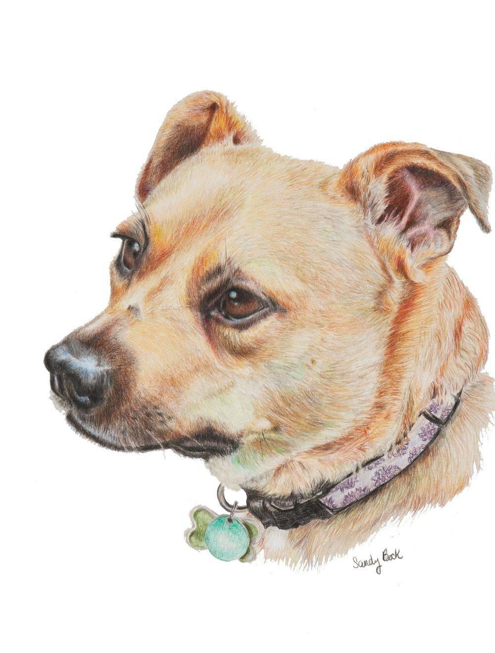 dog portrait, dog, pet, pet portrait, art, sandy bock