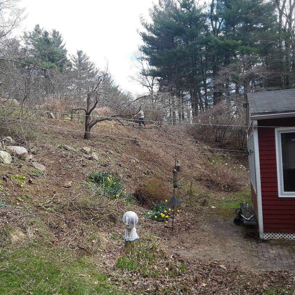 lawn care northeast connecticut landscaping shrub removal