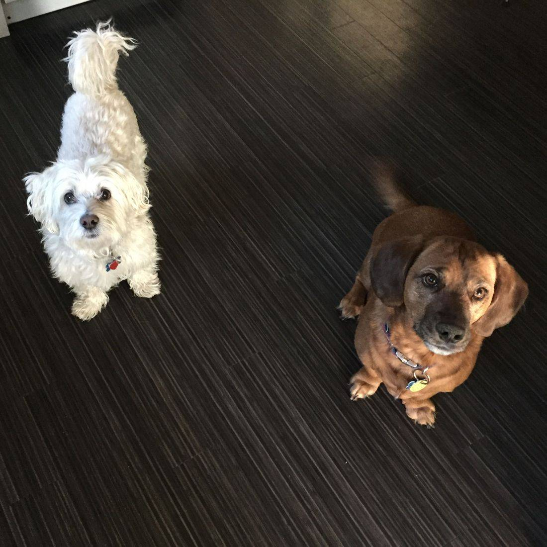 Photo of two dogs looking at the camera