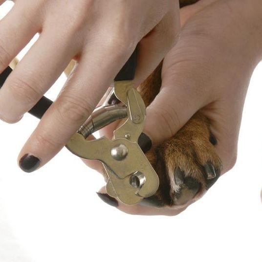 Papuzzo nail clipping