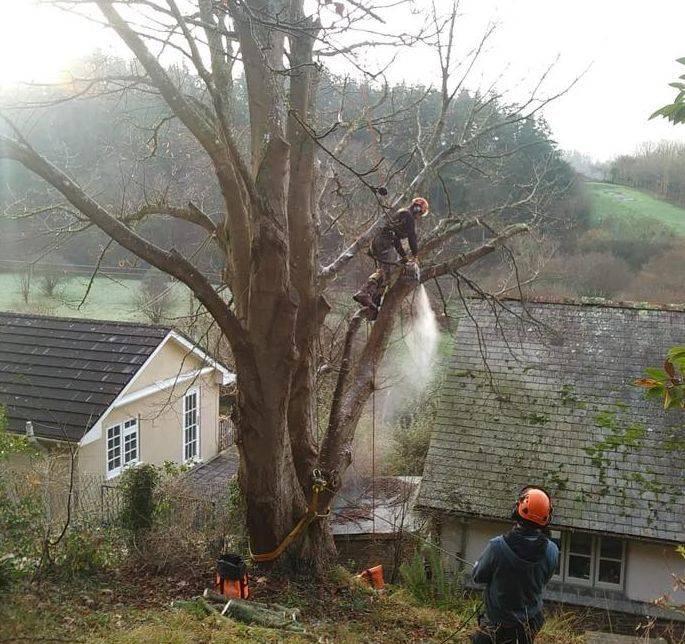 Tree Surgeon in Torrington