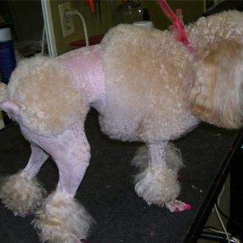 Pet Parlor Continental Cut
