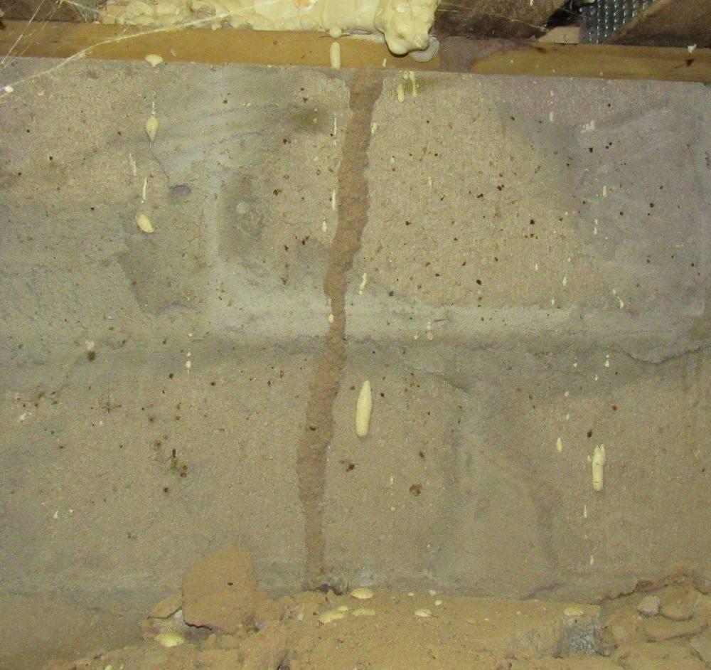Termite tunnel, insect tube, termites