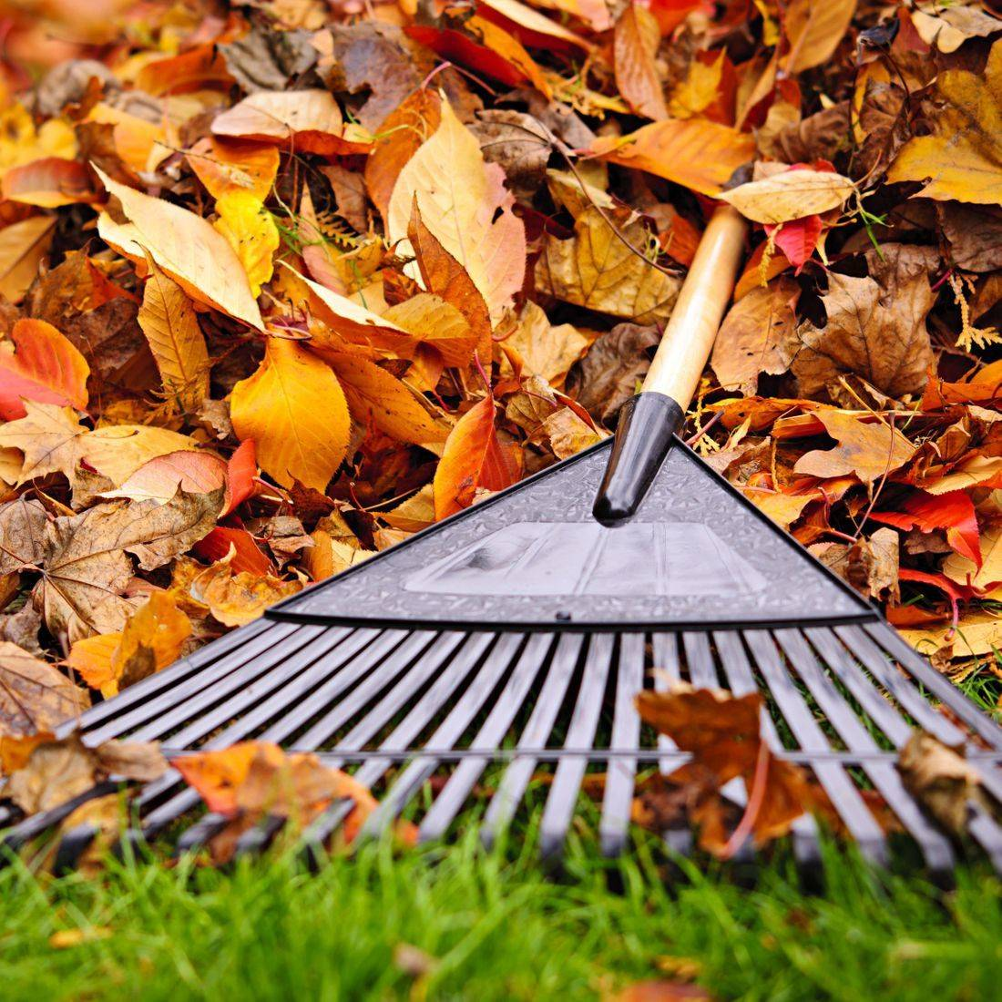 leaf clean up, debris removal, yard cleanup, fall clean up