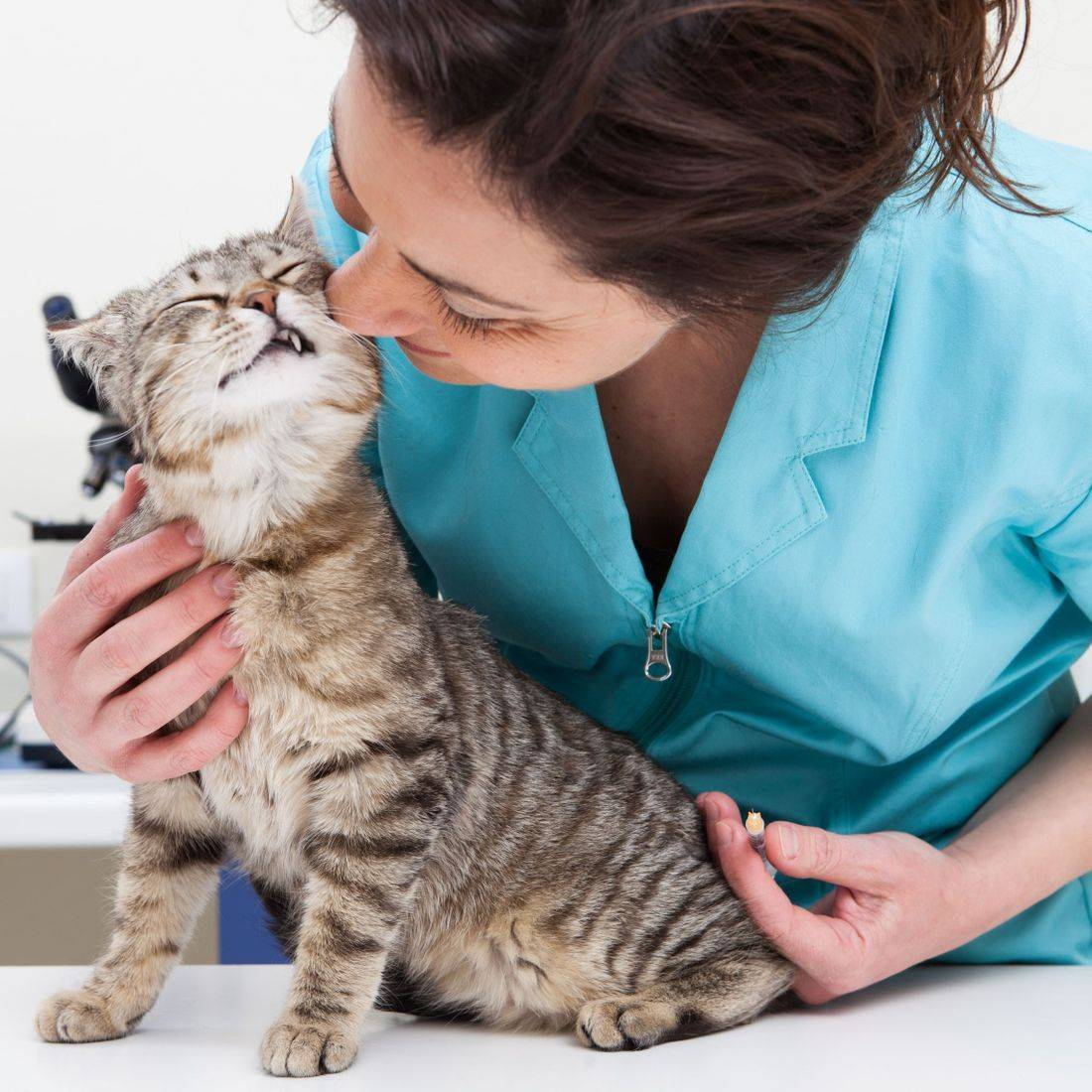 Pet Parlor Cat Grooming