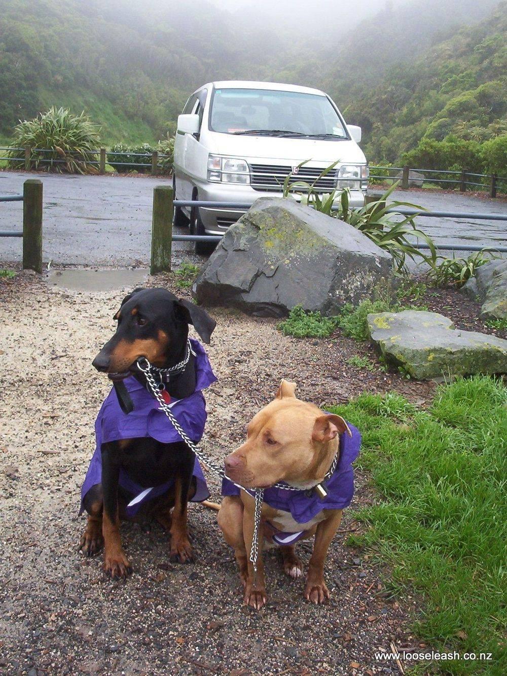 Waihinahina Dog Park Woof Woof Ruff Off Leash Dog Exercise Area (aka Dennis Duggan Park) A great dog walking area, whatever the weather! Dobermann & friend looking cute in their purple dog rain coats!
