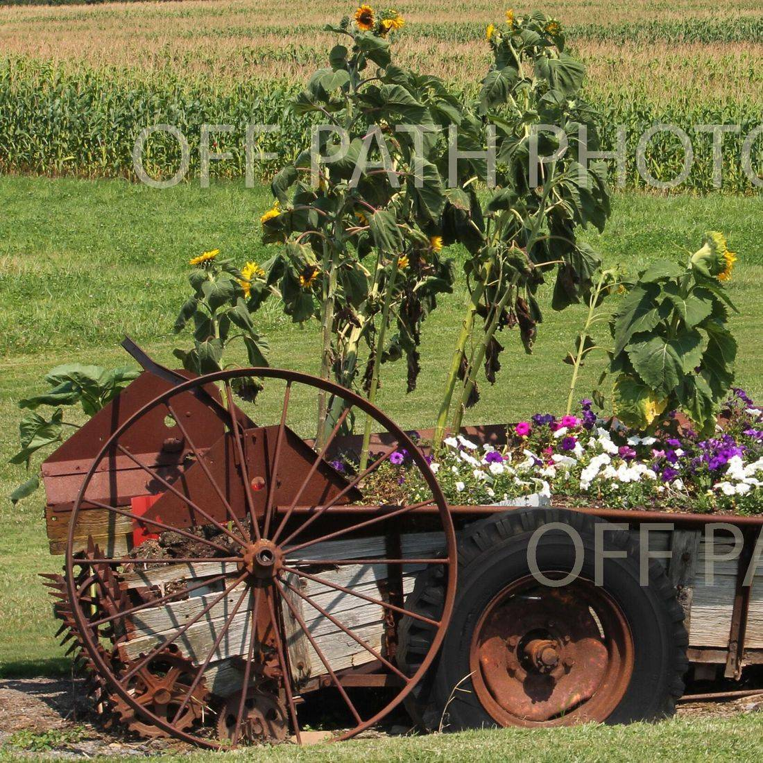 photography, flowers, plants, summer, antique farm machinery, fields,  country,  wheels