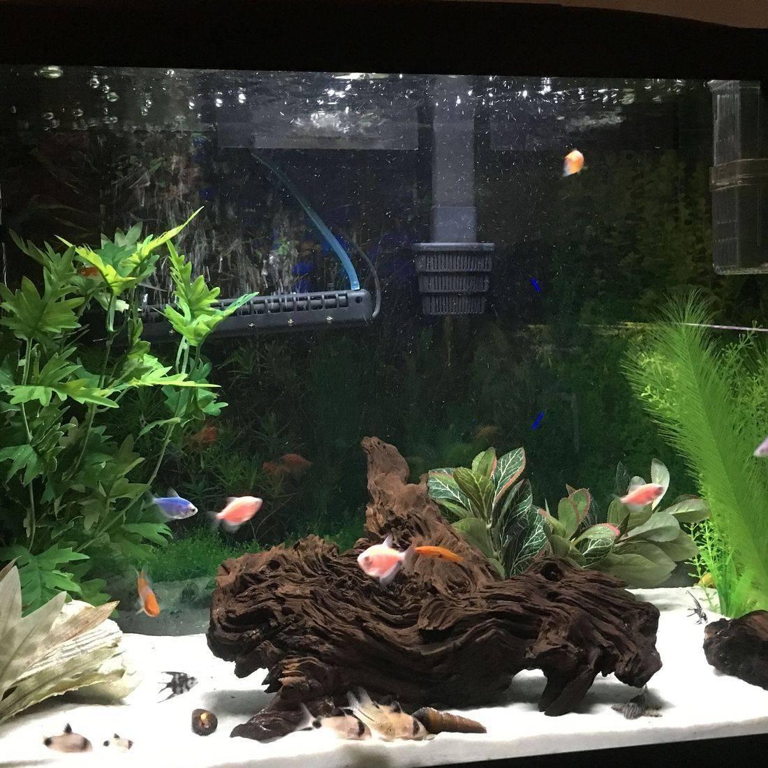 freshwater, aquarium