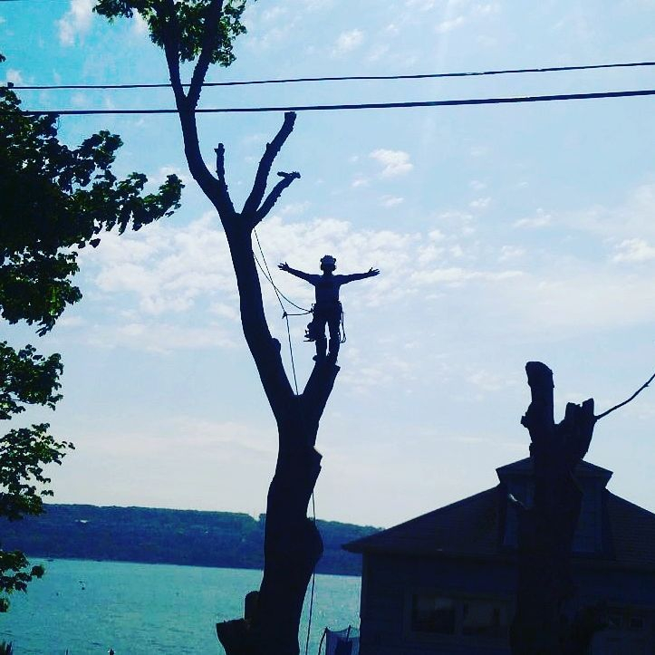 Tree Removal, Tree Services