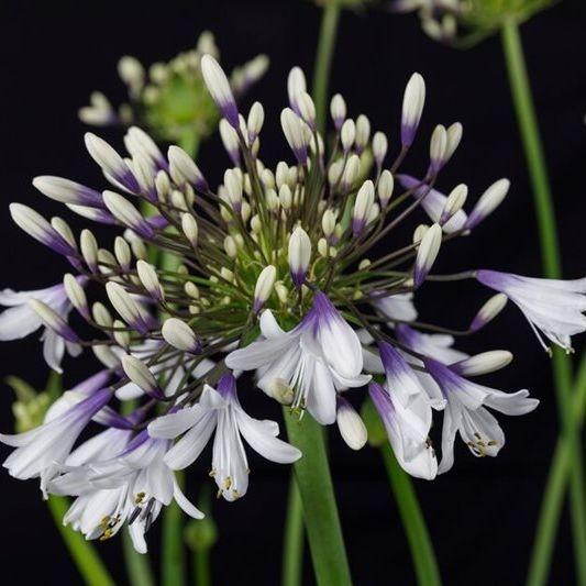 Summer flower gardens Susan Bonnett Garden Advisor Hampshire