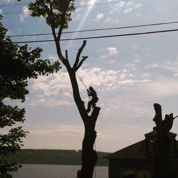 Tree Serivces, Tree Removal, Tree trimming, tree climbing