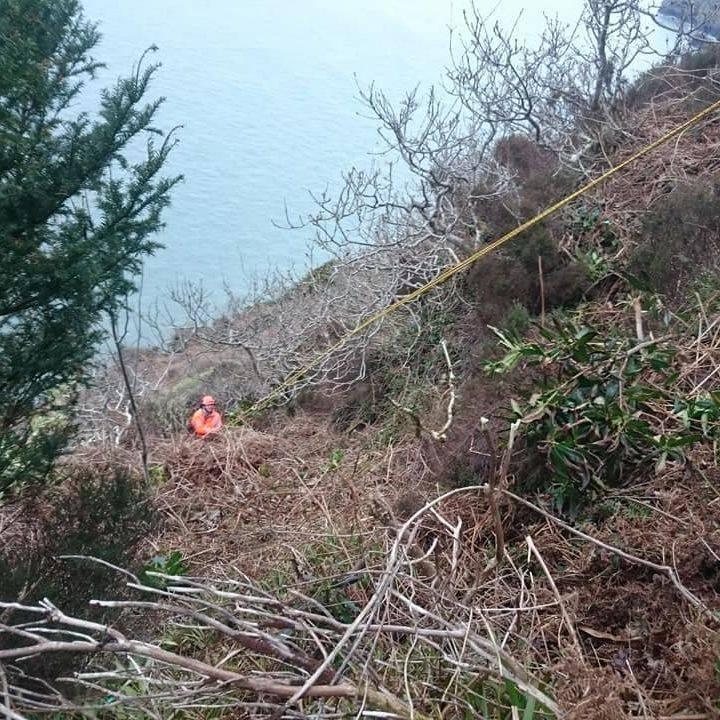 Rhododendrun clearance north devon