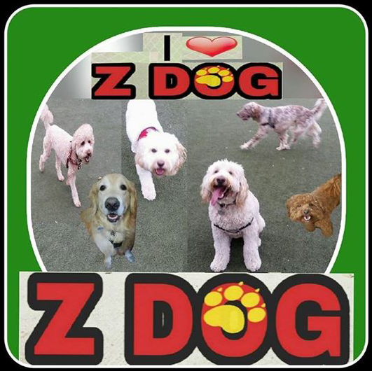 Z Dog Day Care, Dog Walks, Cat Care, Boarding / Kennel / Pet Sitting
