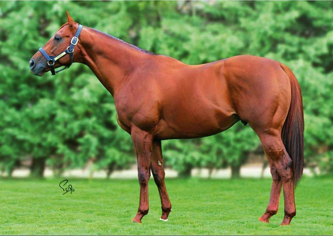 Evasive stallion hingst