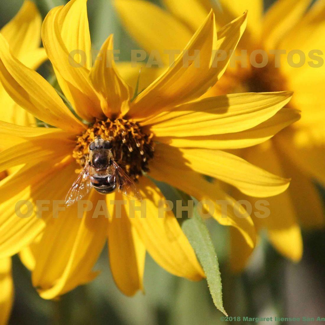 photography, sun flower, bee, nature, plants, summer, honey, relax, green
