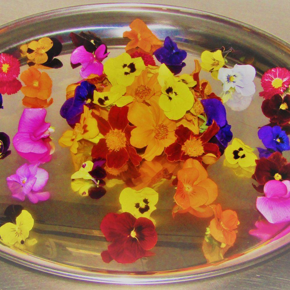 Mix & Blend Catering Edible Flowers
