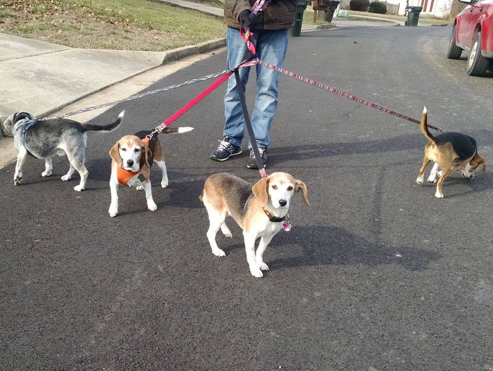 Best Dog Walker In Woodbridge