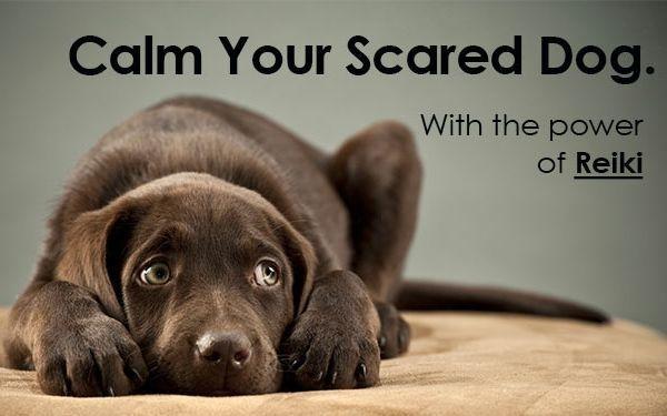long distance healing Animal Reiki For Dogs Animal Healer