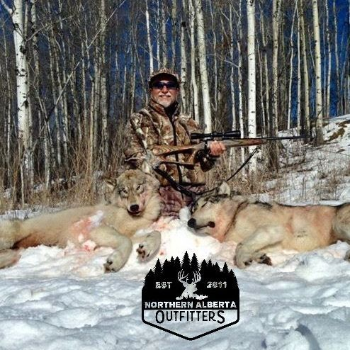 ELK HUNTING BUCKS  ALBERTA OUTFITTING  WOLF WHITETAIL BEAR MOOSE