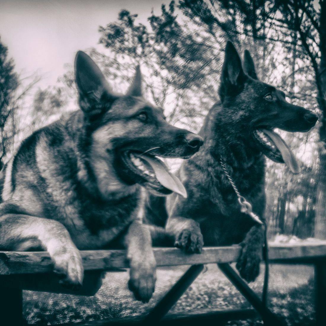 Dreamscape Canada Pet Photography