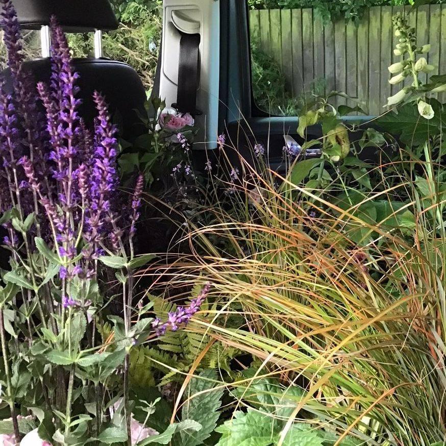 Plants Hampshire garden Susan Bonnett Garden Advisor nursery order