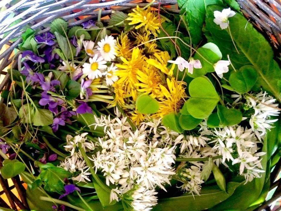 edible flowers, learning edible flowers